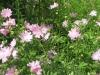 7-24-13-flowers-014