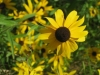 7-24-13-flowers-062
