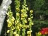 7-24-13-flowers-102